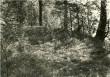 Vaade maa-alusele kalmistule  Autor A.Sillasoo  Kuupäev  24.08.1976