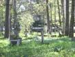 Vanad paekiviristid kalmistu lõunaosas. Foto: Mihkel Koppel. Kuupäev  13.05.2009