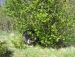 Lohukivi 10697. Foto: M. Abel, 12.05.2009.