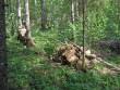 Omanik on hakanud murdunud puid koristama. Foto: Viktor Lõhmus, 21.05.2009.