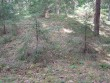 Vaade neljandale kääpale alates Soohara poolt. Foto: Viktor Lõhmus, 28.05.2009.