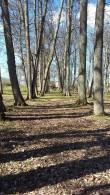 Lustivere mõisa park  Aeg: 03.05.2017  Foto: Sille Raidvere
