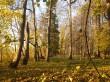 Saare mõisa park ja alleed, pargi lääne poolne osa  Aeg: 19.10.2016 Foto: Sille Raidvere