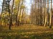 Saare mõisa park ja alleed. Alleed pargi lääne-põhja suunal  Aeg: 19.10.2016 Foto: Sille Raidvere