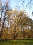 Saare mõisa park ja alleed. Pargiaas pargi keskosas idaküljes.  Aeg: 19.10.2016 Foto: Sille Raidvere