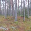 Kääbastik. Foto Mirja Ots 17.11.2017