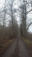 Kurista mõisa pargi läände suunduv musta lepa allee pargi kaitsevööndis Foto: Sille Raidvere Aeg: 09.11.2017