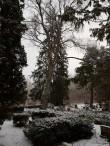 Tõrma kalmistu. Foto: M.Abel, kp 15.01.18