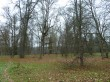 Uhtna mõisa park. Foto: Raili Uustalu 06.10.2017. Vaade puudele üle tagaväljaku.