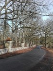Purdi mõisa allee, pargi lõunaservas kasvav tammeallee. Foto: K. Klandorf 25.03.2017.