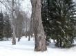 Jäneda mõisa peahoone. Foto: Raili Uustalu 26.03.2018. Vaade pargis.