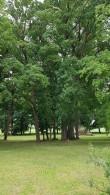 Viru-Nigula pastoraadi park, vaade pargi lõunaosale. Foto: M.Abel, kp 05.06.18
