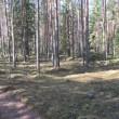 Vaade kääbastele 13484, 13483 ja 13482 teelt ida suunast. Foto Mirja Ots, 23.04.2018.