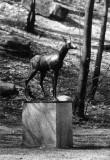 J. Koorti Metskits Nunne tänava haljasalal koos graniitalusega. Erik Raiküla 1975.a. Tallinna Linnaplaneerimise Ameti muinsuskaitse osakonna fotokogu, nr 4128