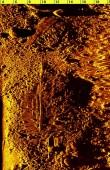 Külgvaate sonari pilt vraki leiukohast 25.07.2018. Muinsuskaitseamet.