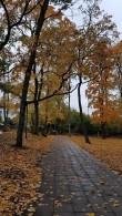 Rakvere mõisa pargi vaade. Foto: M.Abel, kp 09.10.18