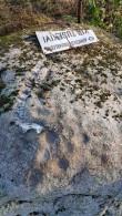 Lohukivi 10508, kivi tipus olevad lohud. Foto: M.Abel, kp 16.10.18