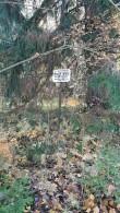 Kalmumännik, mälestise tähis kalmistu kirdenurgas. Foto: M.Abel, kp 16.10.18