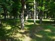 Mõdriku mõisa park. Foto: Raili Uustalu 18.06.2018. Vaade maastikupargi kesosa puistule, kinnikasvanud pargitee.