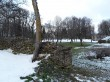 Udriku mõisa piirdemüürid. Foto: Raili Uustalu 07.12.2018. Seemnetekkelised puud lagundavad piirdemüüri.