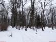 Kiltsi mõisa park. Foto: Raili Uustalu 31.12.2018. Vaade pargi puudele, enamuses seemnetekkelised.