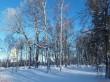 Vinni mõisa park. Foto: Raili Uustalu 24.01.2019. Vaade pargi puudele.