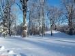 Vinni mõisa park. Foto: Raili Uustalu 24.01.2019. Vaade pargi puudele. Taamal Vinni mõisa jääkelder pargiruumis.