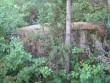 Igaküla rahvapärimustega seotud kivi. Foto: Rita Peirumaa, 21.07.2009.