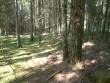 Muistsed põllud Selgase külas. Foto: M. Koppel, 06.08.2009.