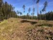 Vaade kääbastikule kagust. Näha lageraie alale jäänud kääpakünkaid, üle tee on mets veel alles. Foto 17.05.2019, A. Lillak.