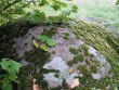 Kivi pealispind. Foto: Kalli Pets, 23.09.2009.