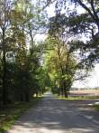Aaspere mõisa alleed reg. nr. 15628 vaade ida-läänesuunalisele alleele idast. Anne Kaldam 29.09.2009