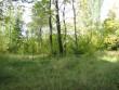Tornimäe vana kalmistu. Foto: M.Koppel, suvi 2009
