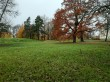 Uuemõisa mõisa park. Foto: Raili Uustalu 18.10.2019. Vaade pargis. Esiplaanil dekoratiivsed harilikud tammed.
