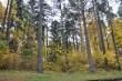 Narva-Jõesuu kuursaali park, 19. saj. Vaade pimepargile idast lehtla juurest.  Foto: Kalle Merilai 9.10.2019.a