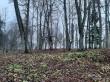 Inju mõisa park. Foto: Raili Uustalu 16.11.2019. Puistus on säilinud mõisaaegsed pärnapuud.