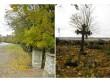 Viru-Nigula kalmistu, reg. nr 5810. Vaade edelapoolsele piirdemüürile. Foto: M.Abel, kuupäev 16.10.2009