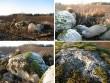 Karstilehtri servale on põldudelt kogutud veelgi kive. Lohukivi on neist suurim. Foto: M. Abel, 02.11.2009.