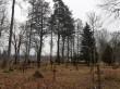 Järva-Madise kalmistu põhjapoolne ala. Foto: K. Klandorf 15.01.2020.