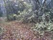 Muistsete põldude ala on kaetud tiheda lehtpuupadrikuga. Padrikus võib leida kuni paarkümmend muistset põllukivihunnikud, millest üksikud on ka kivikalmed. Foto: M. Koppel, 2009.