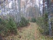 Kivikalme asub servapidi metsatee ääres, tähistatuna tee kõrval. Foto: M. Koppel, 2009.