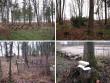 Hulja kalmistu, reg. nr 5766. Vaateid Hulja kalmistult. Foto: M.Abel, kuupäev 02.12.2009