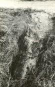 Kultusekivi - läänest. Foto: E. Väljal, 05.10.1984. (Muinsuskaitseameti arhiiv)