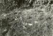 Muistsete põldude jäänused reg nr 12708 (158-k) - kagust. Foto: E. V.