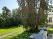 Heimtali mõisa park, 19. saj. Foto: Raili Uustalu 17.06.2020. Vaade peahoone avatud terrassilt vanemale säilinud harilikule elupuule (mitmeharuline).