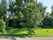 Heimtali mõisa park, 19. saj. Foto: Raili Uustalu 17.06.2020. Vaade peahoone avatud terrassilt piki hoone kesktelge (taamal vanem harilik tamm võsas, esiplaanis isetekkeline noor harilik tamm).