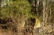Tõenäoliselt kivi, mida pärimuses nimetatakse ohvrikiviks ja kirjeldatakse, et mõisnik lasi selle ära lõhkuda. Foto: Jüri Metssalu, 23.04.2018