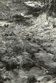Ohvriallikas reg nr 12518 (691) - kirdest. Foto: E. Väljal, 14.05.1980ndad aastad.