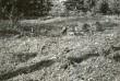 Kivikirstkalme reg nr 12544 (633) - lõunast. Foto: E. Väljal, 1980ndad aastad.