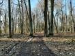 Jõgeva mõisa park. Foto: Raili Uustalu 02.03.2021. Peamise (pargi)tee ääres on säilinud pärnapuid.